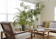 3. レンタルの植物を設置いたします。
