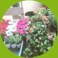 季節に合わせて植物変更可能