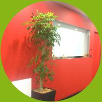 空間を彩る植物をご提案