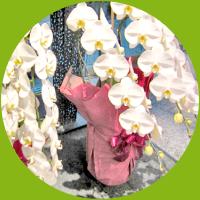 祝い事でもらった胡蝶蘭や植物を引き取ってもらえる