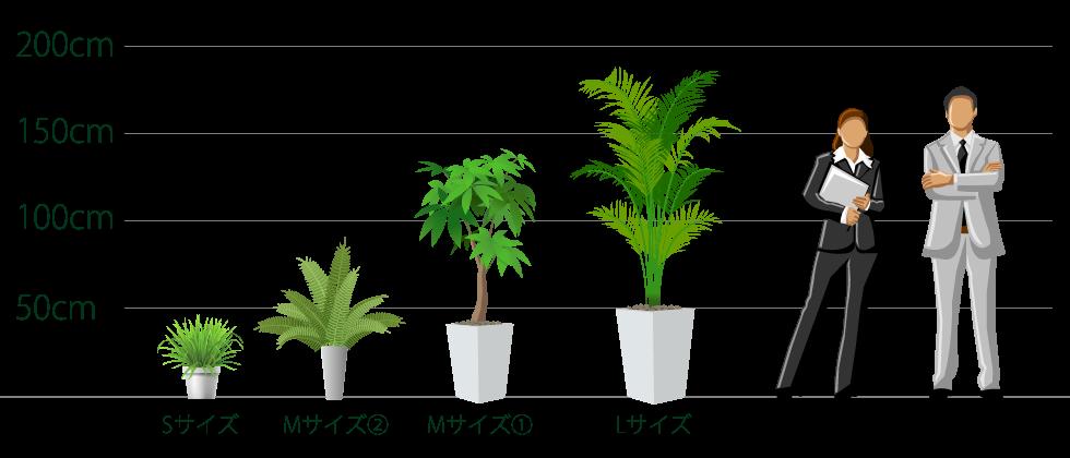 観葉植物のサイズの目安