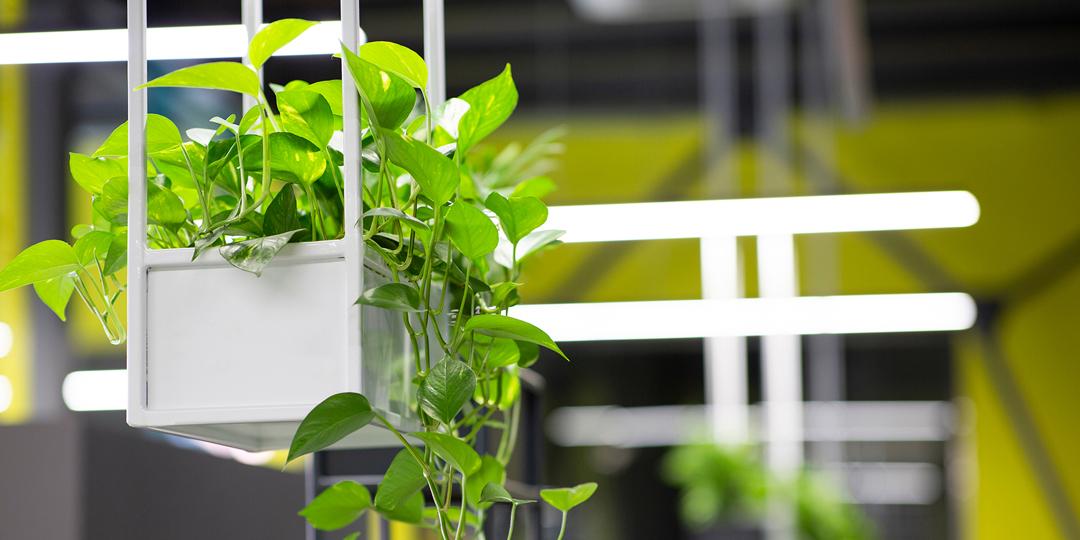 オフィスに観葉植物を置く問題点