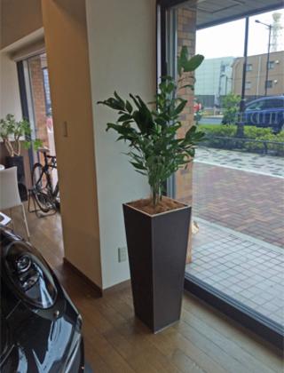 渋谷区のショールームへの観葉植物の設置事例サムネイル