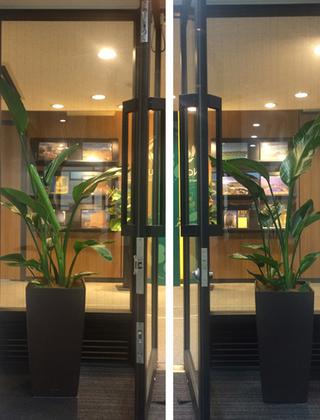 港区のオフィスへの観葉植物の設置事例サムネイル
