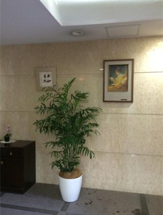 渋谷区のマンション エントランスへの観葉植物の設置事例サムネイル