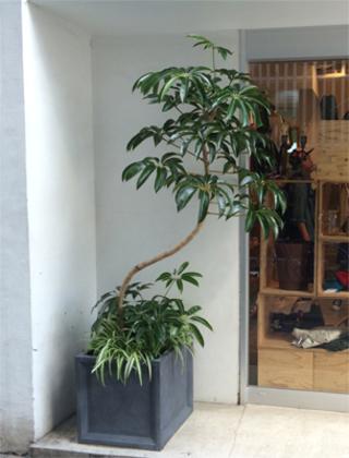 新宿区のアパレル店への観葉植物の設置事例サムネイル