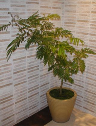 新宿区の雑貨店への観葉植物の設置事例サムネイル