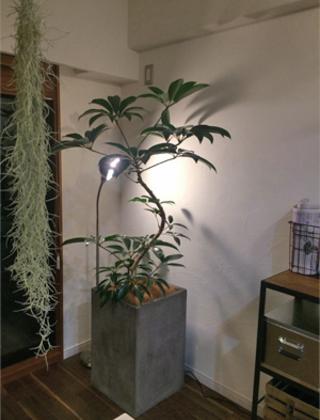 東京都内のモデルルームへの観葉植物の設置事例サムネイル