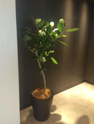東京都内の宿泊施設への観葉植物の設置事例サムネイル
