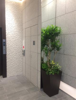 渋谷区のオフィスビル エントランスへの観葉植物の設置事例サムネイル