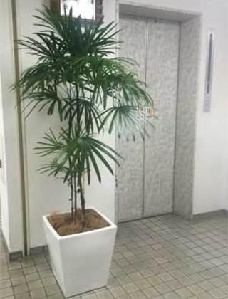 杉並区のマンション エントランスへの観葉植物の設置事例サムネイル