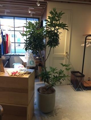 渋谷区のカフェへの観葉植物の設置事例サムネイル