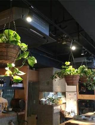 吉祥寺のワインバルへの観葉植物の設置事例サムネイル