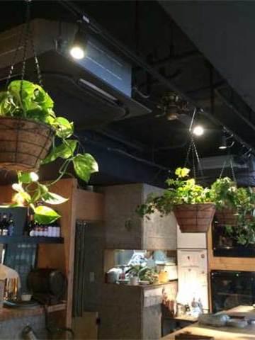 吉祥寺のワインバルへの観葉植物の設置事例