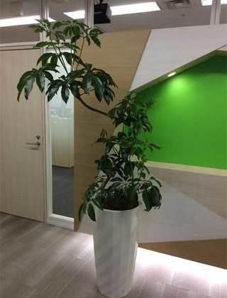 渋谷区のオフィスへの観葉植物の設置事例サムネイル