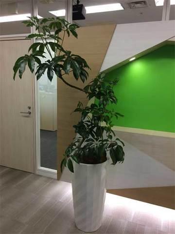 渋谷区のオフィスへの観葉植物の設置事例