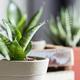 オフィスに植物を置くならレンタル?購入?ポイント別比較!! [コスト編]