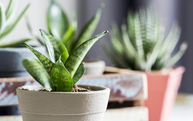 オフィスに植物を置くならレンタル?購入?ポイント別比較!! [コスト編]サムネイル
