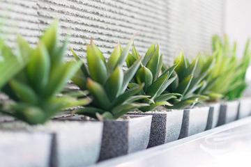 オフィスに植物を置くならレンタル?購入?ポイント別比較!! [植物選び編]