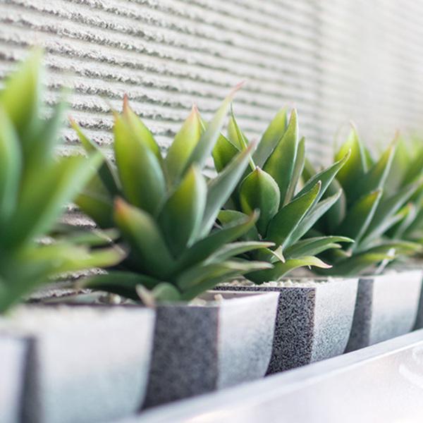 オフィスに植物を置くならレンタル?購入?ポイント別比較!! [植物選び編]サムネイル