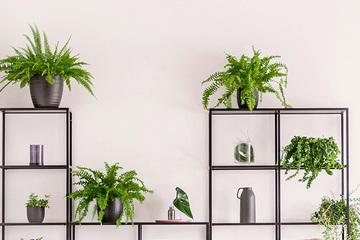 オフィスに植物を置くならレンタル?購入?ポイント別比較!! [植物の交換編]
