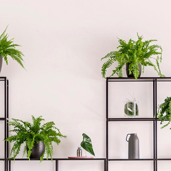 オフィスに植物を置くならレンタル?購入?ポイント別比較!! [植物の交換編]サムネイル