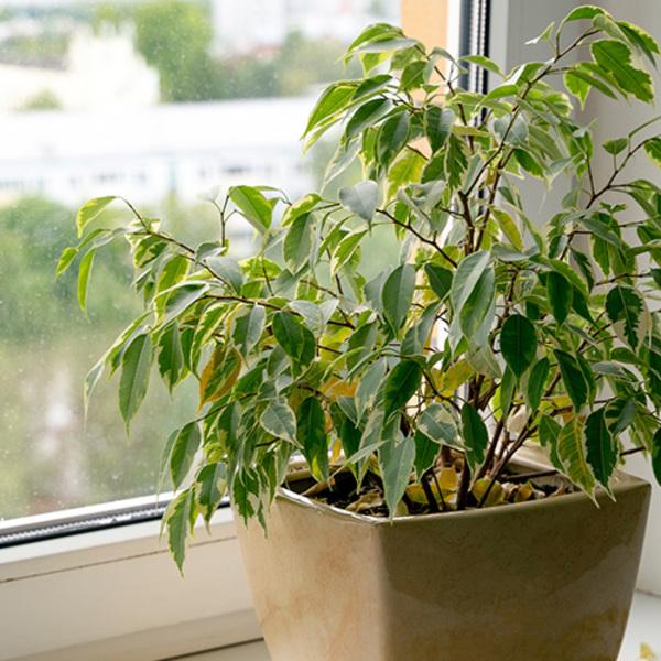 オフィスに植物を置くならレンタル?購入?ポイント別比較!! [廃棄編]サムネイル
