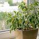 オフィスに植物を置くならレンタル?購入?ポイント別比較!! [廃棄編]