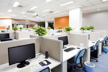 「うちのオフィス、グリーンを何鉢置いたらいいですか?」