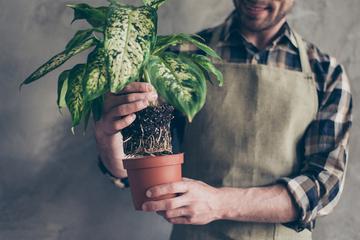 オフィスや店舗で観葉植物をレンタルするまでの流れを徹底解説