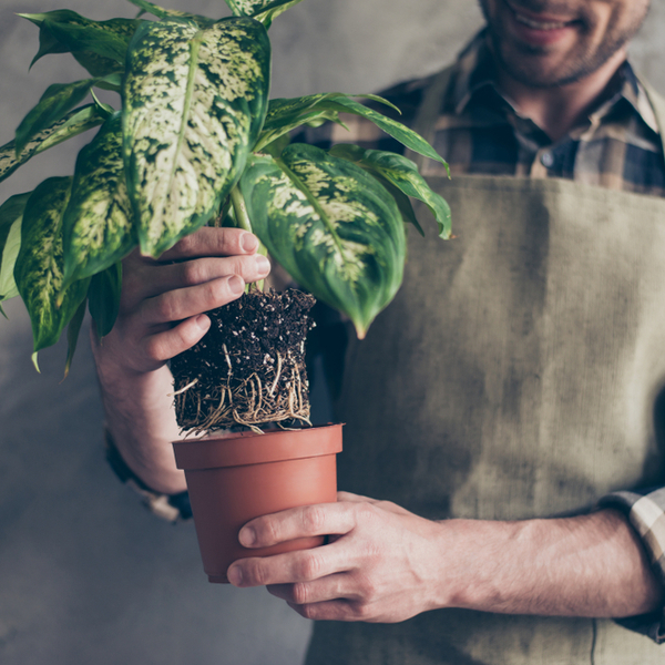 オフィスや店舗で観葉植物をレンタルするまでの流れを徹底解説サムネイル