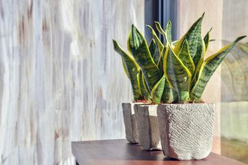 観葉植物でオフィスの空気がきれいになる?