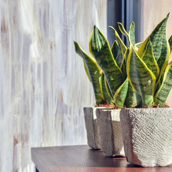 観葉植物でオフィスの空気がきれいになる?サムネイル