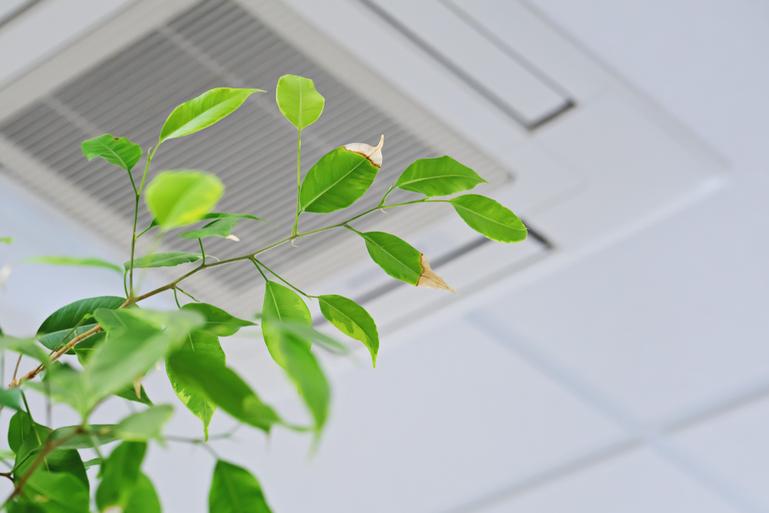 観葉植物はエアコンがある部屋でも育つの?オフィスやお店では?サムネイル