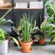 観葉植物はレンタルと購入、どちらがいいの?オフィスでのオススメは?
