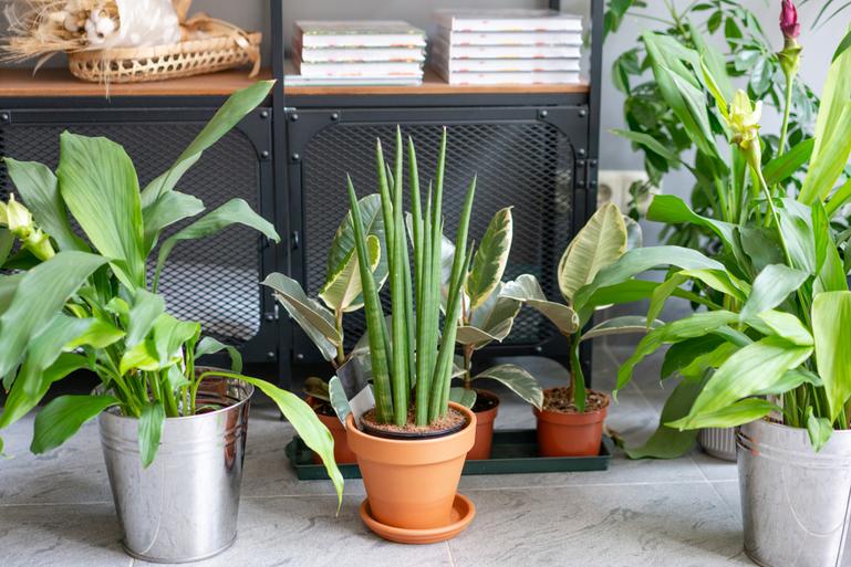 観葉植物はレンタルと購入、どちらがいいの?オフィスでのオススメは?サムネイル