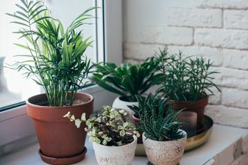 はじめての方必見!オフィスの観葉植物の選び方とは?