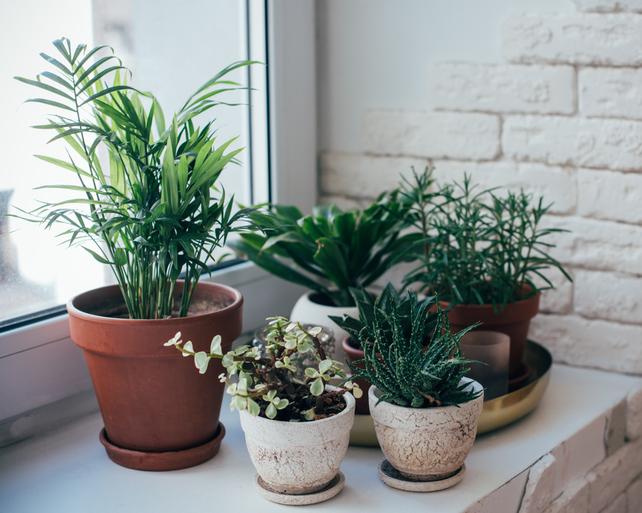 はじめての方必見!オフィスの観葉植物の選び方とは?サムネイル
