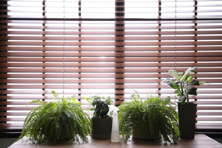 観葉植物はオフィスの雰囲気に合わせて色合いを選ぼう!サムネイル