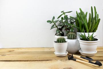 施設別の観葉植物設置事例集~具体例を紹介~