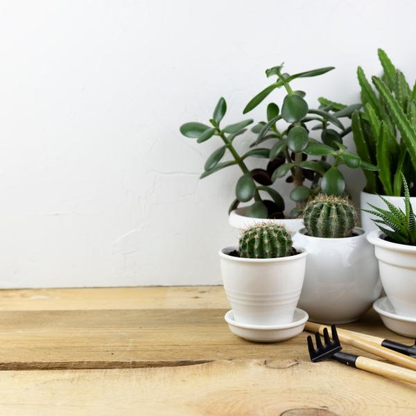 施設別の観葉植物設置事例集~具体例を紹介~サムネイル