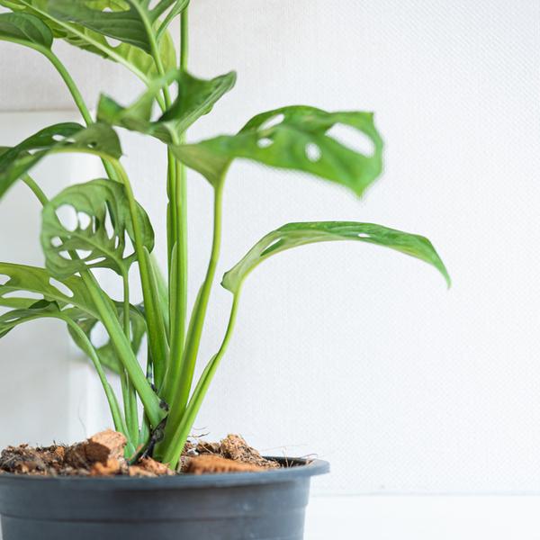 【元気に育てる!】観葉植物のための環境メンテナンスとその方法サムネイル