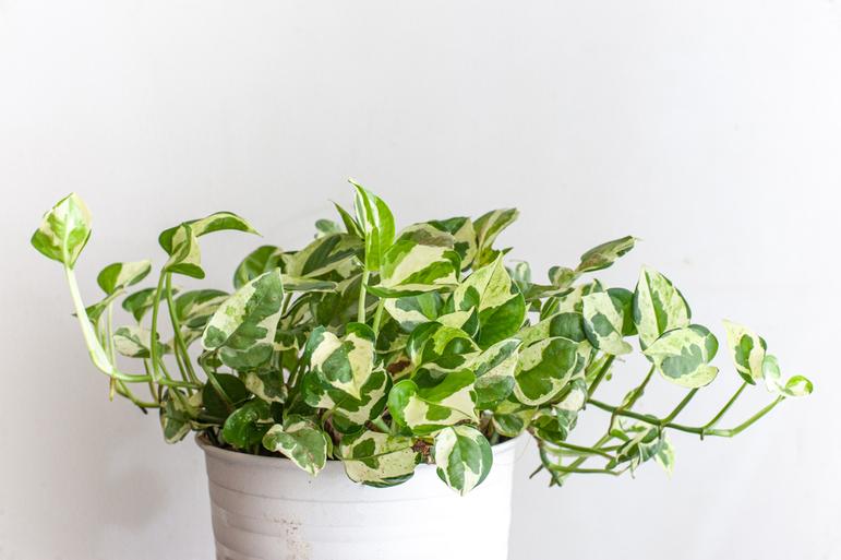 業者による観葉植物の交換の頻度はどれくらい?交換された植物はどこへ?サムネイル