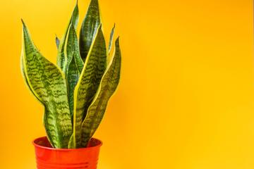 短期のイベントでも利用可能!観葉植物をレンタルするメリットとは?
