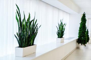 観葉植物レンタルを利用してオフィスや店舗を緑で彩る!