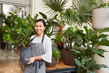 【基礎知識】観葉植物レンタルの勘定科目について解説