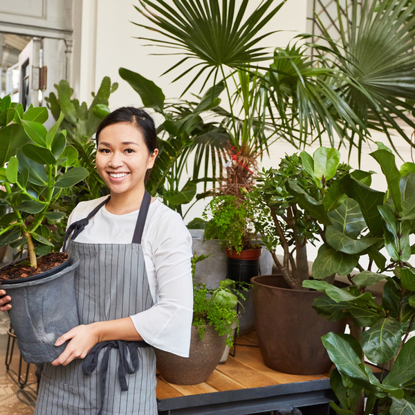 【基礎知識】観葉植物レンタルの勘定科目について解説サムネイル