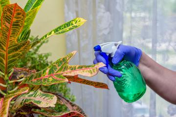 観葉植物が汚れてしまう原因とは?汚れ対策についても紹介