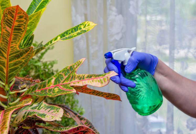 観葉植物が汚れてしまう原因とは?汚れ対策についても紹介サムネイル
