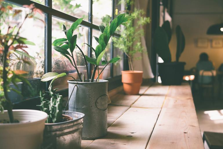観葉植物の効果にストレス発散、リラックス作用が!オフィスや職場に置くメリットサムネイル